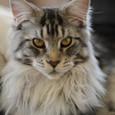 06. Alphonse (nickname: Al or Alpon)